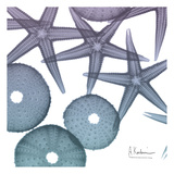 Lavender Dipped Starfish 2