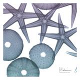 Lavender Dipped Starfish 2 Reproduction d'art par Albert Koetsier