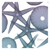 Lavender Dipped Starfish 1 Reproduction d'art par Albert Koetsier