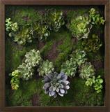 *Exclusive* Faux Succulent Lavender Mini Garden I