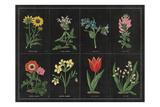 Botanical on Black Chart I