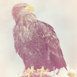 Eagle - Soft