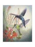 Hummingbird Cycle I