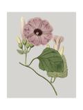 Floral Gems IV