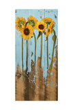 Sunflowers on Wood II