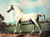 "Vintage White Horse Chromolithograph ""Mambrino "" from the Picture by George Stubbs 1817"