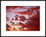 Silhouette of Roseate Spoonbills in Flight at Sunset  Tampa Bay  Florida  USA