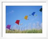 Kites on the Beach  Long Beach  Washington  USA