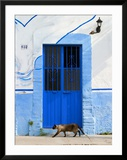 Detail of Siamese Cat in Doorway with Wrought Iron Cover  Puerto Vallarta  Mexico