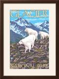 Mountain Goats Scene  Glacier National Park  Montana