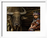 Hani Child and Water Buffalo for Ploughing Rice Paddies  Yuanyang  Honghe Prefecture  China