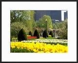 Public Gardens  Boston  MA