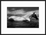White Horse Swimming