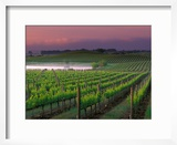 Sunrise in Distant Fog  Carnaros  Napa Valley  California  USA