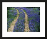 Tracks in Bluebonnets  near Marble Falls  Texas  USA