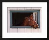 Thoroughbred Race Horse in Horse Barn  Kentucky Horse Park  Lexington  Kentucky  USA