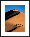 Camel Caravan at Sunset  Silk Road  China