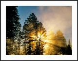 God Rays from Morning Fog Along the Madison River  Yellowstone National Park  Wyoming  USA