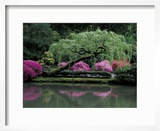Reflecting pool and Rhododendrons in Japanese Garden  Seattle  Washington  USA