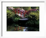 Moon Bridge and Pond in a Japanese Garden  Seattle  Washington  USA