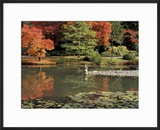 Reflecting Pool in Japanese Garden  Seattle  Washington  USA