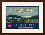 Clear Lake Pear Crate Label - Lake County  CA