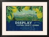 Display Lemon Label - Ventura  CA