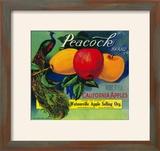 Peacock Apple Crate Label - Watsonville  CA