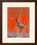 Nature Magazine - View of a Ibis in a Marsh  c1926