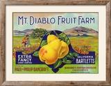 Bancroft  California  Mt Diablo Fruit Farm Brand Pear Label