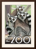 Visit the Zoo  Ring Tailed Lemurs