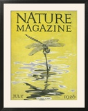 Nature Magazine - View of a Dragonfly over a Pond  c1926