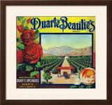Duarte  California  Duarte Beauties Brand Citrus Label