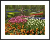 Tulip and Hyacinth Garden  Keukenhof Gardens  Lisse  Netherlands  Holland
