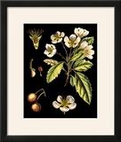 Black Background Floral Studies I