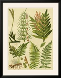 Fern Collection II