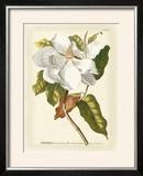 Magnificent Magnolias I