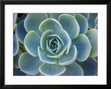 Close-Up of a Succulent Plant