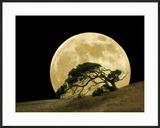 Windswept Live Oak Tree and Rising Full Moon at Night