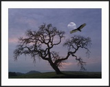 Oak Tree Silhouetted Against Cloudy Sunrise with Partially Obscured Moon and Flying Vulture