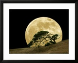 Windswept Live Oak Tree and Rising Full Moon at Night
