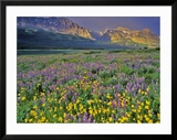 Meadow of Wildflowers in the Many Glacier Valley of Glacier National Park  Montana  USA
