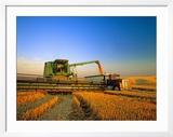 Farmer Unloading Wheat from Combine Near Colfax  Washington  USA