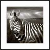 Black & White of Zebra and Plain  Kenya