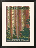 Pfeiffer Big Sur State Park  California - Giant Redwoods