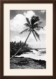 Hawaii - Palms along the Beach