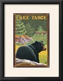 Bear in Forest - Lake Tahoe  California