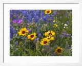 Prairie Wildflowers  Montana  Usa