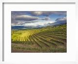Newton Vineyard  Napa Valley  California  Usa