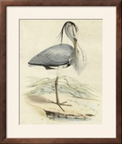 Antique Heron IV